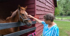 Michelle petting a horse - header